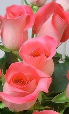 Rosas, ramo de rosas, enviar rosas, 12 rosas rojas, ramo de 12 rosas rojas, ramo rosas, ramo de 12 rosas, ramo de 24 rosas, ramo de rosas blancas precio