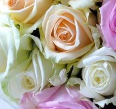 Rosa Preservada, Regalo de San Valentín, Rosa Eterna, Floristería Online, Rosas Naturales, Floristerías en Bilbao, Floristería Hiedra