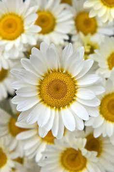 Regalar flores por internet, flores de aniversario, enviar flores españa, cestas de flores online silvestres, flores urgentes