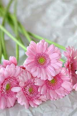 Ramo Flores Malta, Comprar Flores Online, Envios Florales Urgentes, Floristería Online, Ramos de Flores para Regalar, Flores Domicilio